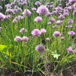 Wichtige Pflanzeninhaltsstoffe
